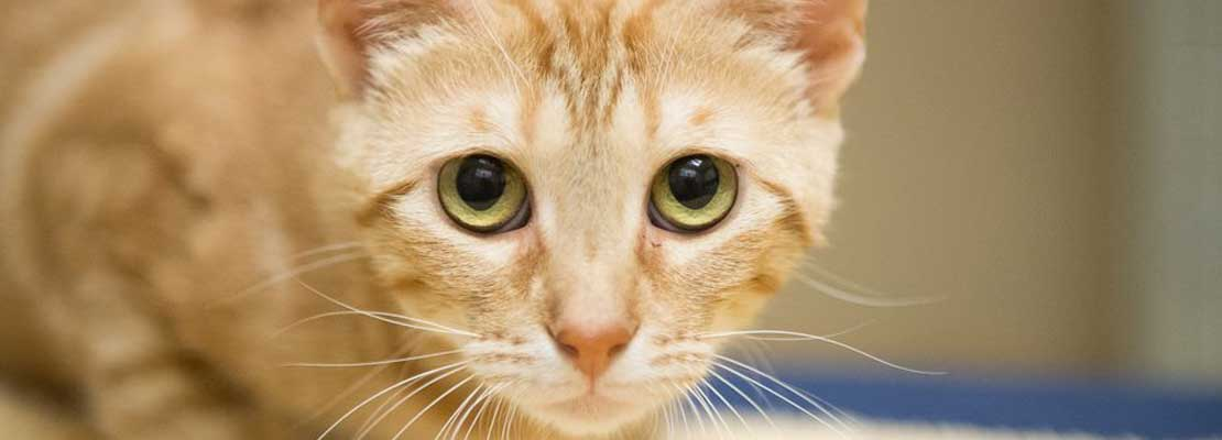 Cat eyes looking for adoption