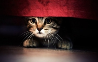 Scared Cat under bed