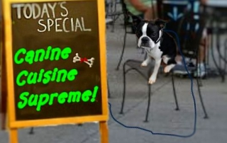 With a little online research, you can find al fresco dining for your canine companion.