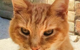 Garfield, a stray who had been a pet, remained friendly and affectionate like the housecat he once was.