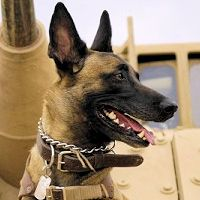Military working dogs have served alongside human soldiers for hundreds of years.