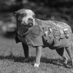 Sergeant Stubby, a military working dog, was the most decorated canine of World War I.