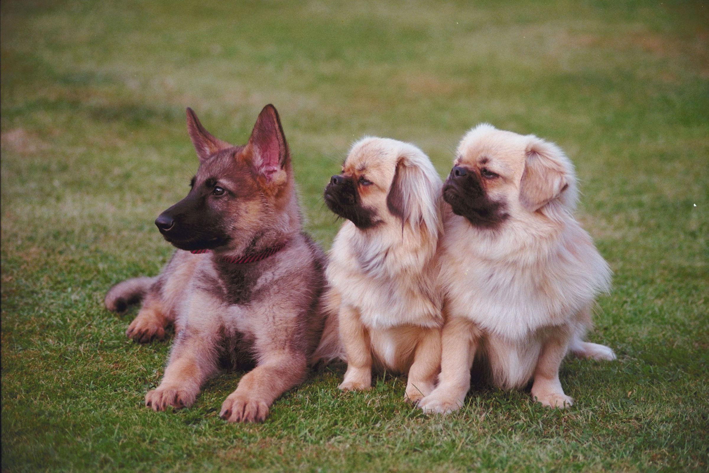 Fun Facts about Dogs - Catering to Cats and Dogs