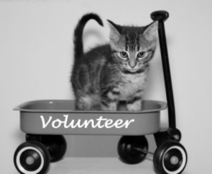 Cat in volunteer wagon