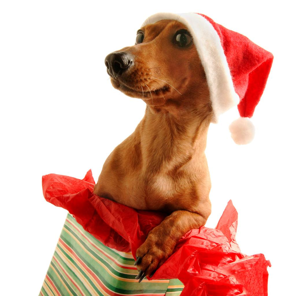 Great Gift Ideas for  Dogs